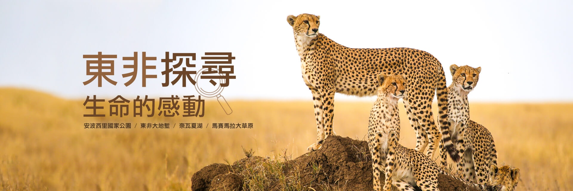 上順、東非、肯亞、動物大遷徙