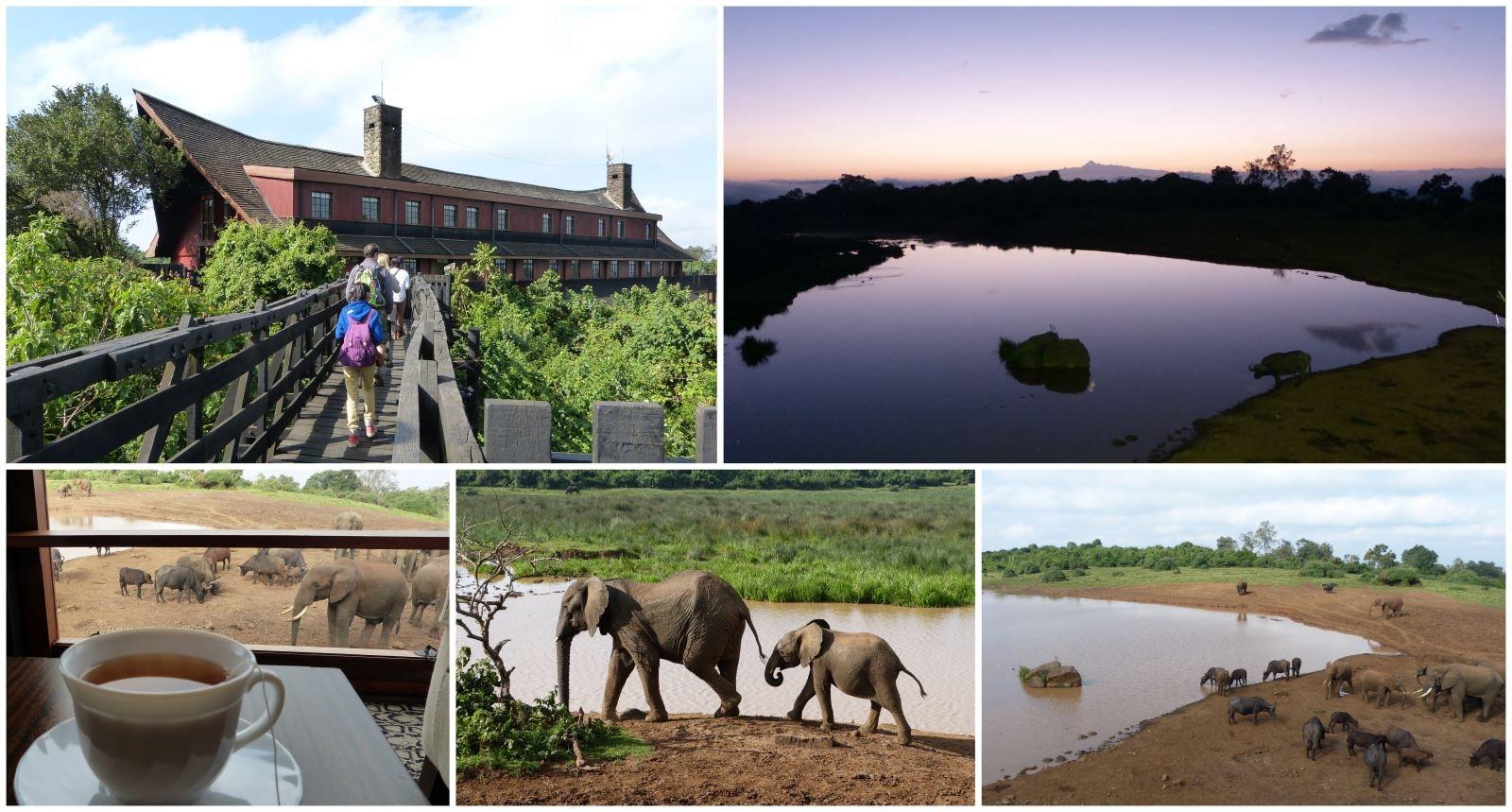 jambo东非肯亚动物奇观非洲大草原9日