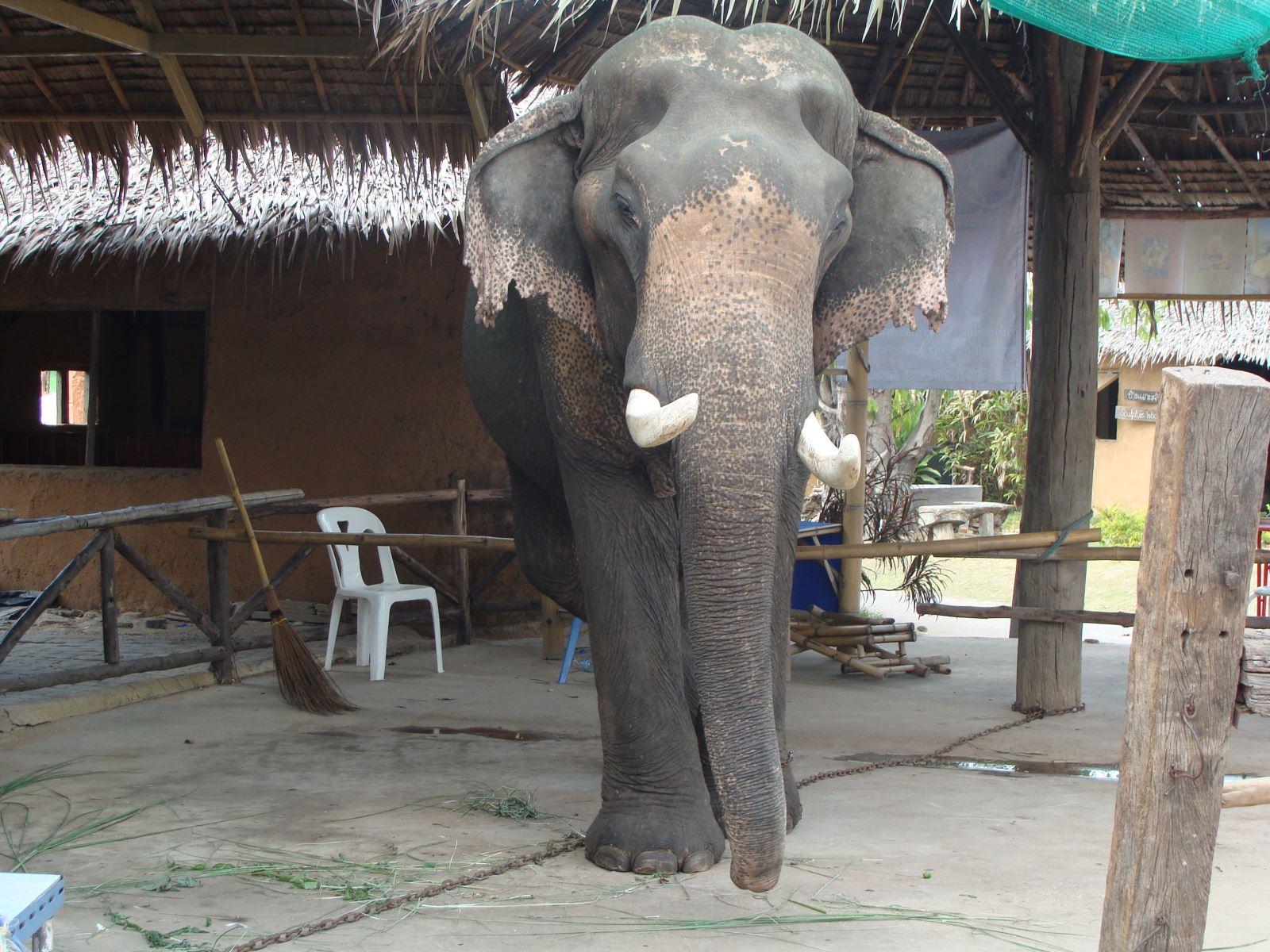 大象 动物 1600_1200